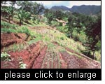 Diversified sustainable land use management system that combines terracing and agroforestry, Uluguru Mountains, Tanzania.
