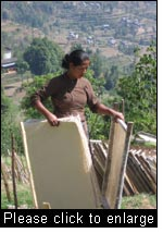 A woman employee of the Bhimeshwor processing unit, Dolakha District, Nepal, drying raw paper made from Lokta (Daphne spp), sourced from local Community  The enterprise is supported through the Nepal Swiss Community Forestry Project. (Photo: Jane Carter, Intercoopertation (IC-HO), April 2008)